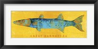 Framed Great Barracuda
