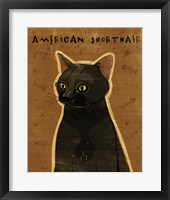 American Shorthair Framed Print