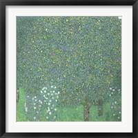 Framed Roses Under The Trees,  c. 1905