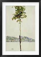 Framed Horse Chestnut Tree, Lake Constance. 1912