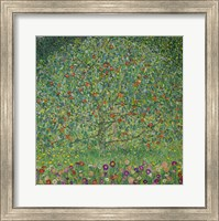 Framed Apple Tree  I, 1912