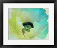 Framed Poppy Gradient I