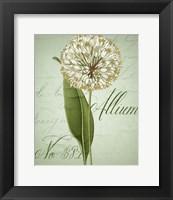 Framed Allium II