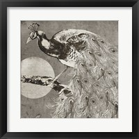 Moon Peacock Framed Print