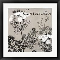 Flowering Herbs IV Framed Print