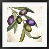 Olive Branch I Framed Print