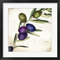 Framed Olive Branch III