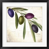 Framed Olive Branch IV