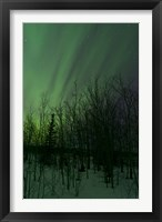 Framed Aurora Borealis over Trees