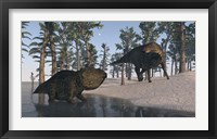 Framed Udanoceratops and Shuangmiaosaurus