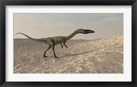 Framed Coelophysis Walking through Desert