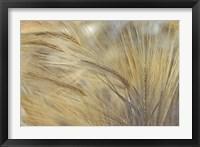Framed Foxtail