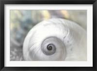 Framed Pearl Lite