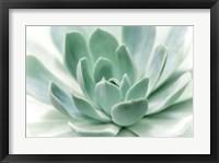 Framed Zen
