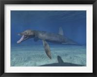 Framed Pliosaurus Kevani