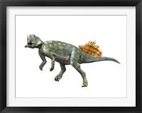 Framed Psittacosaurus Lujiatunensi
