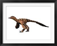 Framed Sinornithosaurus Dinosaur