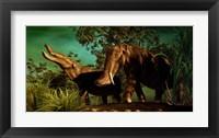 Framed Platybelodon