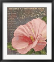 Framed Peach Hibiscus