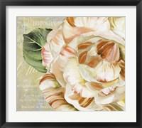 Framed Camellias I