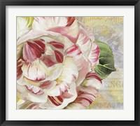 Framed Camellias II