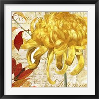 Chrysanthemes II Framed Print