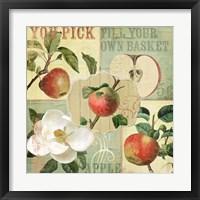 Framed Apple Blossoms II