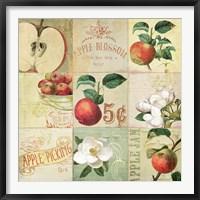 Apple Blossoms IV Framed Print