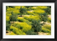Framed Olive Trees, Provence of Granada, Andalusia, Spain
