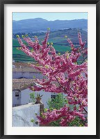 Framed Flowering Cherry Tree and Whitewashed Buildings, Ronda, Spain