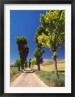 Framed Pilgrimage Road, El Camino de Santiago de Compostela, Castile, Spain
