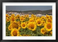 Framed Spain, Andalusia, Cadiz Province, Bornos Sunflower Fields