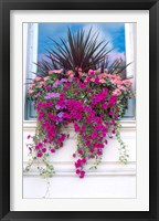 Framed Flower Box in London, England