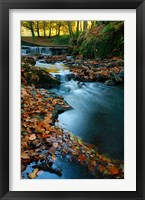 Framed Stream with Autumn Leaves, Forest of Dean, UK