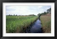 Framed Wicken Fen, Cambridgeshire, England