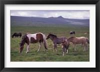 Framed Horses of Dartmoor, Devon, England