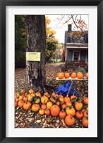 Framed Pumpkins For Sale in New England