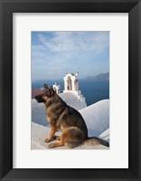 Framed Greece, Santorini, Oia, Dog, Blue Domed Churches