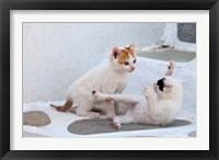 Framed Kittens Playing, Mykonos, Greece