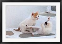 Framed Kittens Playing, Mykonos, Greece