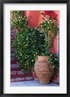 Framed Large Pot With Honeysuckle Vine, Santorini, Greece