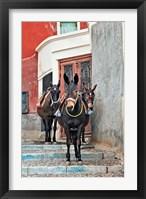Framed Mules, Imerovigli, Santorini, Greece