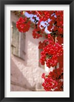 Framed Red Flowers on Main Street, Kardamyli, Messina, Peloponnese, Greece