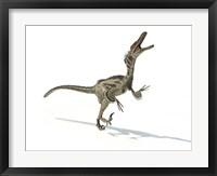 Framed Velociraptor Dinosaur