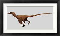 Framed Velociraptor Mongoliensis from the Cretaceous Period