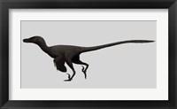 Framed Velociraptor Mongoliensis, Mid-sized Dinosaur
