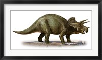 Framed Triceratops Dinosaur 6