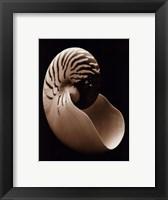 Nautilus Framed Print