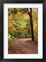 Framed Fall Road