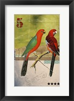 Framed Birds